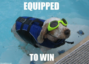 funny swimming animals 06
