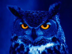 night_owl_quotes