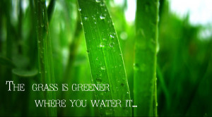 The Grass Is Greener Syndrome