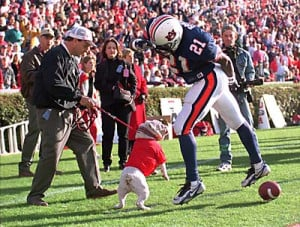 Uga is lovable, but ferocious. AP Photo/Patricia Miklik, Montgomery ...