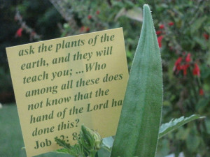 ask the plants of the earth, and they will teach you... Job 12: 8a