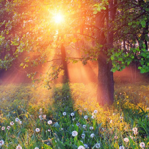 The summer solstice marks the longest day of the calendar year and the ...