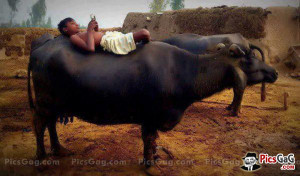 Funny Village Desi Life Humorous Picture and This Desi Village Funny ...