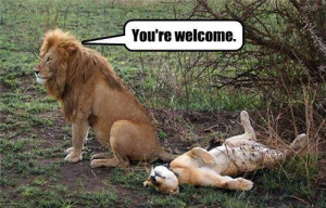 Funny photos funny lion alpha male female