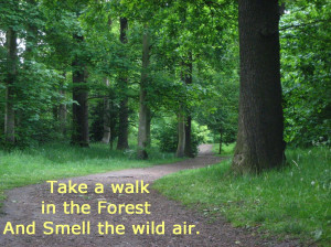 Nature Quotes Forest