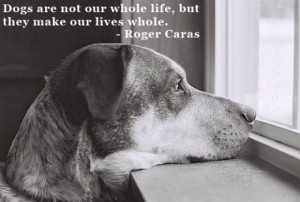 The Best Quotes About Dogs Focus On The Dog's Themselves - And ...