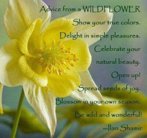 Advice from a Wildflower