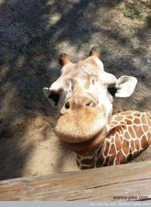 animals giraffes leave a reply party hard