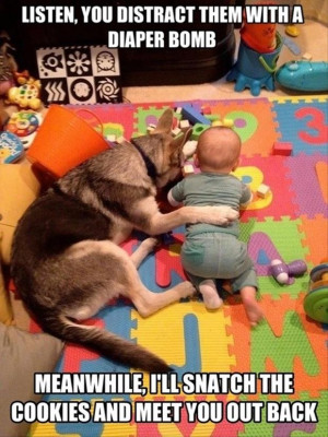 Funny Animals with Captions 8