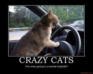 CRAZY CATS - This ones going to a mental hospital!!!