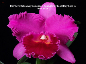 are all very beautiful and amazing wallpapers of beautiful quotes most ...