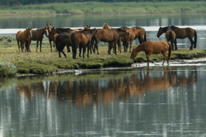 Top 10 quotes for horse lovers