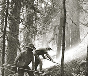 ... fireline on smoky forest hillside. Courtesy of USDA Forest Service