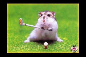 ... hamster birthday animal animal love birthday cake cute funny happiness