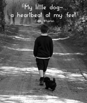 After reading these quotes you will love your pet even more.