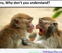 monkey-are-smart-smart-quote-monkey-quote-funny-monkey-565814.jpg