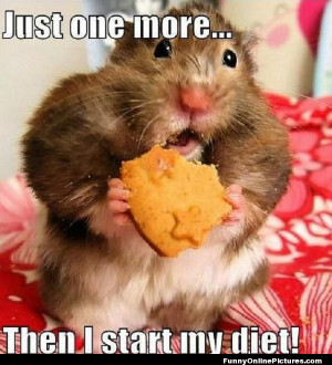 funny meme pic of a hamster who is soon starting his diet…