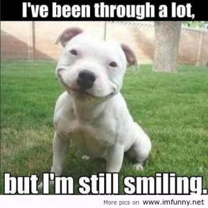 funny-quotes-quotes-funny-pics-funny-animals-demotivational-pics-Favim ...