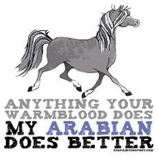 quotes arabian horse poster more horse quotes arabian horses quotes ...