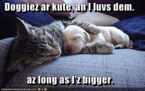 cute cat picture cat snuggles dog