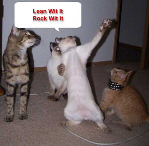Funny Random Cat Pictures With Quotes | Image 1 of 71.