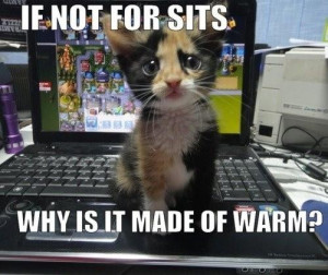 Cat-Humor-Bengal-Cat-Jokes~~element84.jpg