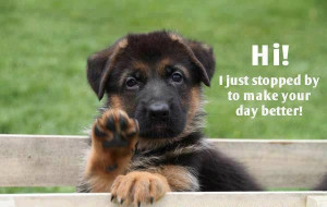 Good Pix For Funny German Shepherd Quotes