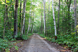 Hiking The Pemigewassett Wilderness, New Hampshire: Pemi East Side ...