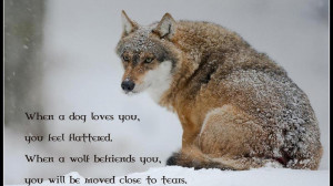 Wolf wisdom spirit mythical black pack the HD Wallpaper