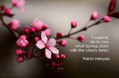 pablo neruda, cherry trees, quotes More