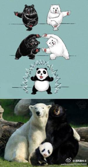 Black Bear + Polar Bear = Panda Bear