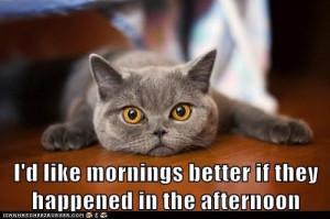 Cat-Wisdom-4