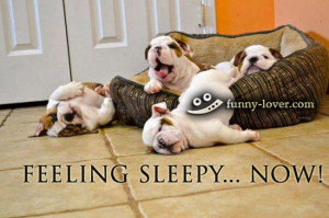 funny dogs pictures funny sleepy pictures