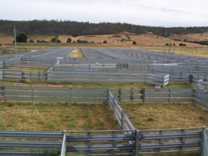 Roberts sheepyard at Oatlands constructed by a localpany for