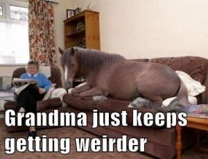 ... funny animals funny pics funny pictures grandma humor lol grandma