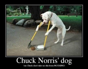 funny #dog #pictures | Collection of top 30 funny dog pictures