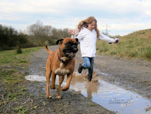 Boxer Dog Gallery