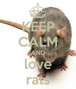 keep-calm-and-love-rats-19