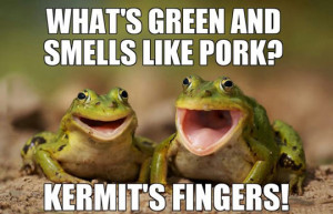 Two happy frogs joking around…