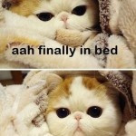 finally in bed… need pee