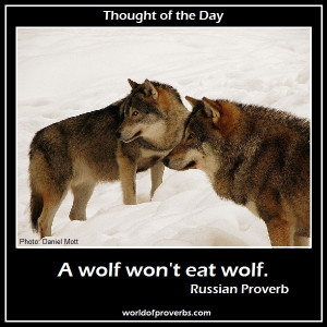 World of Proverbs - Famous Quotes: A wolf won't eat wolf. ~ Russian ...