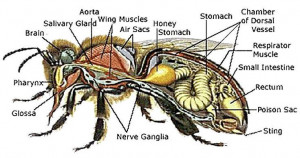 ... Average Honey, Bees Secret, Bees Education, Honey Bees, Bees Workers