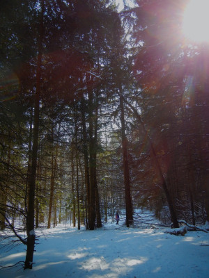 Quotes About Mother Earth by our Original Inhabitants (and Winter ...