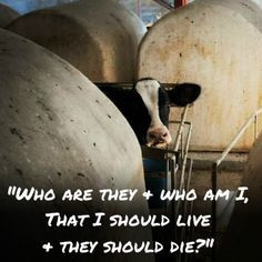 ... cow, or pig. More inspirational animal rights quotes here: http://www