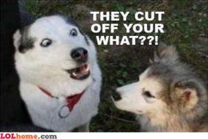Neutered dog – Funny Images