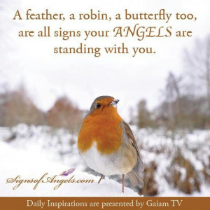 Feathers,Robins and Butterflys