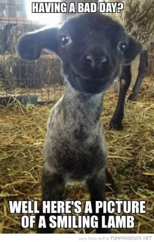 bad day cute lamb smiling animal sheep funny pics pictures pic picture ...