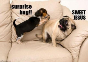 Funny Dogs-funny-dogs-surprise-hugs