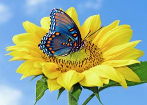 上一篇: 花卉底纹 下一篇: 蝴蝶花高清图片2