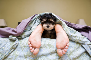 Puppy_under_the_covers.jpg#puppies%20under%20covers%20849x565